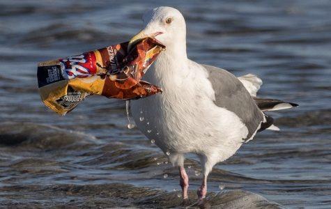 Seagulls Strike Back