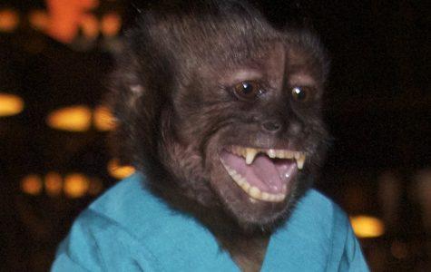 Crystal the Monkey