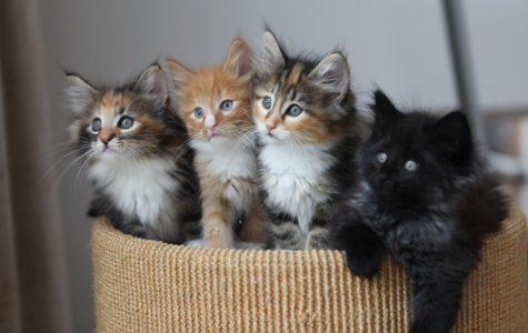 Fundamental Problems of Kittens