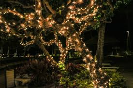 Flowers and Christmas Lights (Poem)