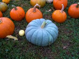 The Meaning of Blue Pumpkins