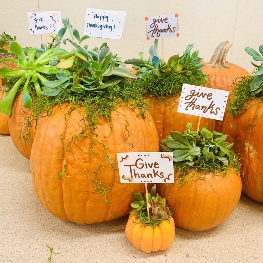 Succulent+Pumpkins+For+Sale