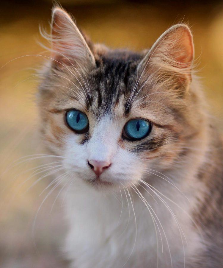 Pets+Effect+on+Mental+Health