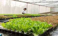 What Is Hydroponics and Why Is It Useful?