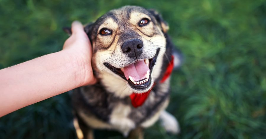 Why You Should Adopt Pets