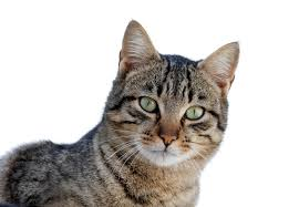 Brain Parasites from Cats