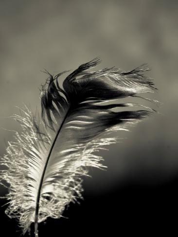The Meaning of Finding Feathers