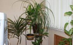 Indoor Plants You Can Buy To Improve Air Quality