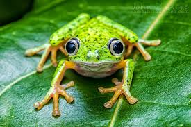 Facts about Frogs
